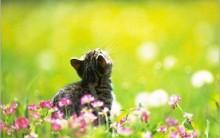 Gatinhos Fofos – Veja uma Seleção dos Felinos mais Lindos da Internet