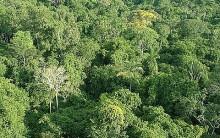 Modelo de Sustentabilidade – Floresta de Aceh na Indonésia