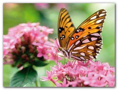 foto borboleta Fotos Lindas do Reino Animal   As mais Belas Imagens da Natureza