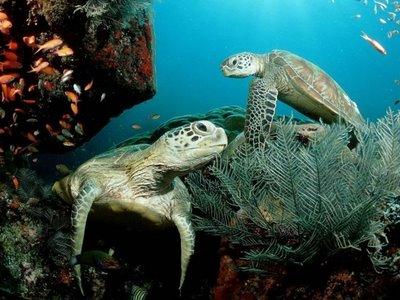 foto tartaruga Fotos Lindas do Reino Animal   As mais Belas Imagens da Natureza