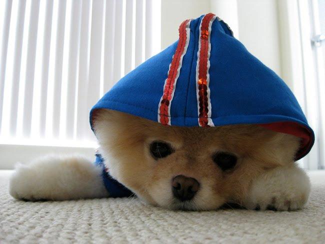 caes mais fofos do mundo foto 2 Os Cães mais Fofos do Mundo   Fotos de Cachorrinhos Lindos e Peludos