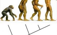 Como Montar um Cladograma – Dicas e o Passo-a-passo, Estudo Científico