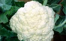 Benefícios da Couve-Flor para Saúde e Vitaminas