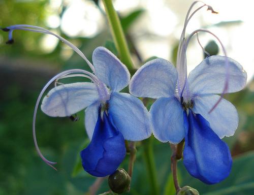 melhores-fotos-de-flores-flor-orquídea