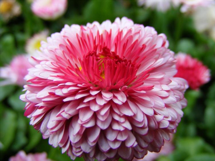 Melhores fotos de flores lindas e coloridas rosa azul roxo veja