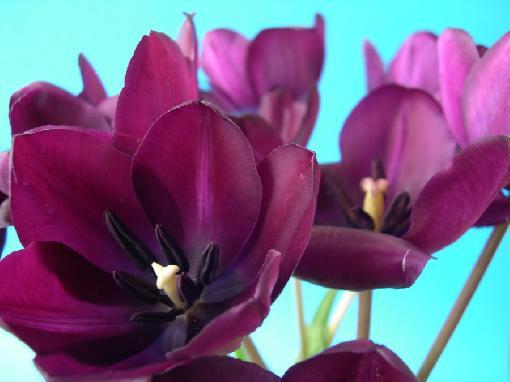 melhores-fotos-de-flores-lindas