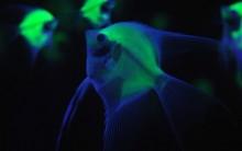 Peixes que Brilham no Escuro – Fotos Criaturas Luminosas, Fundo do Mar