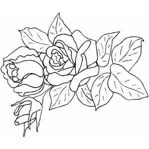 Rosa Colorir Para O Dia Das Maes