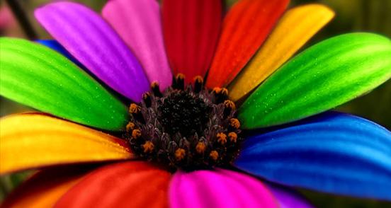 flor colorida Lindas Fotos e Imagens Coloridas   Cores do Arco Íris e Objetos, Flor