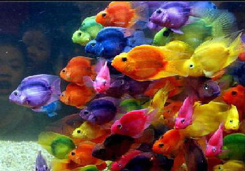 peixes coloridos 2 Lindas Fotos e Imagens Coloridas   Cores do Arco Íris e Objetos, Flor