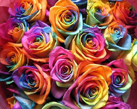 rosas coloridas Lindas Fotos e Imagens Coloridas   Cores do Arco Íris e Objetos, Flor