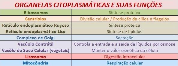 tabela de funcoes das organelas citoplasmaticas Resumo sobre as Organelas Citoplasmáticas   Nomes, Funções e Tabela