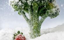 Dicas de Como Congelar Alimentos Corretamento Mantendo o Sabor