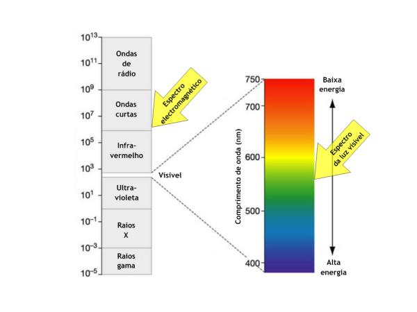 decomposicao da luz branca Fotossíntese: Como Funciona e Etapas, Resumo para Estudo com Esquemas