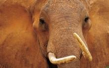 Melhores Fotos da Vida Selvagem: Imagens Incríveis, Animais, Cotidiano