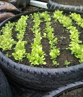 horta pneus   Como fazer Horta Reciclando Pneus usados Passo a Passo. Agro ecologia