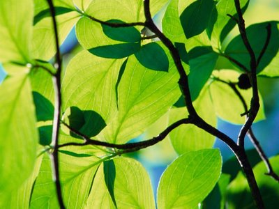 plantas Fotossíntese: Como Funciona e Etapas, Resumo para Estudo com Esquemas