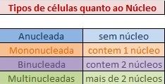 tabela dos tipos de celulas  Núcleo Celular   Função na Célula, Estrutura, Tabelas, Imagens e mais