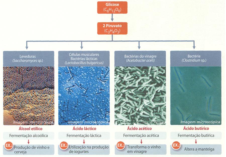 tipos de fermentacao Fermentação Alcoólica, Lática e Acética: Tipos de Respiração Anaeróbia