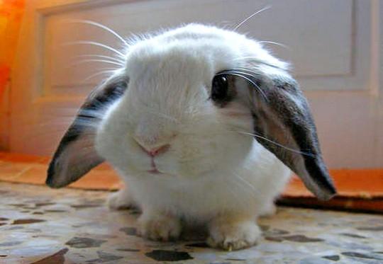 mini coelho fofo Melhores Fotos de Filhotes Fofos: Cachorro, Gato, Coelho, Foca e mais