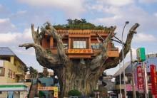 Naha Diner Harbor, o Restaurante que Fica em Cima de uma Árvore, Fotos