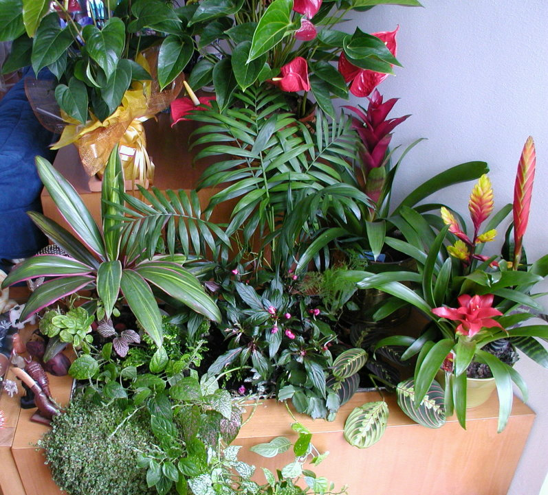 flores e jardins fotos:Plantas Para Jardim De Inverno