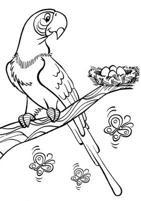 arara para pintar Desenhos para Colorir de Pássaros: Melhores Aves, Imagens para Pintar