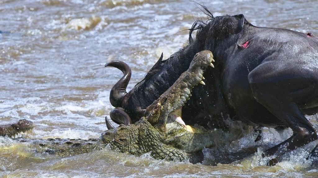 Ataques de animais selvagens fotos 52