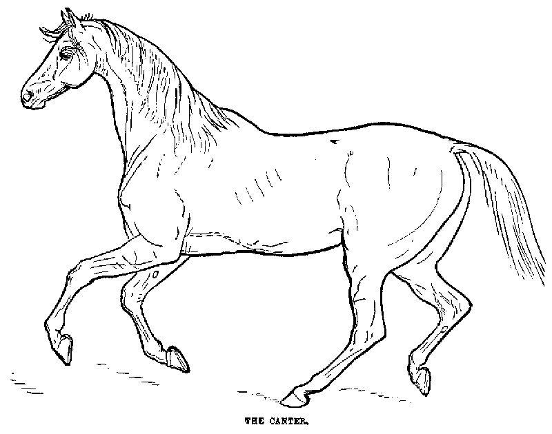 desenho de cavalo para colorir Desenhos para Colorir de Cavalos