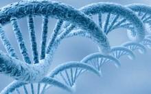 Transcrição do DNA: Como Acontece, Resumo, Esquema para Estudo, Tabela