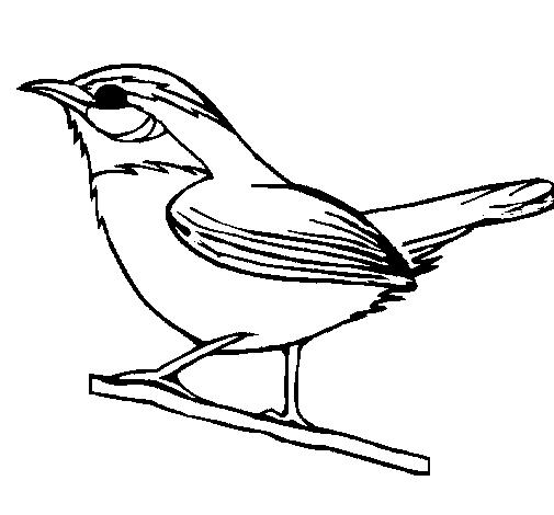 Desenhos para Colorir de Pássaros: Melhores Aves, Imagens para Pintar