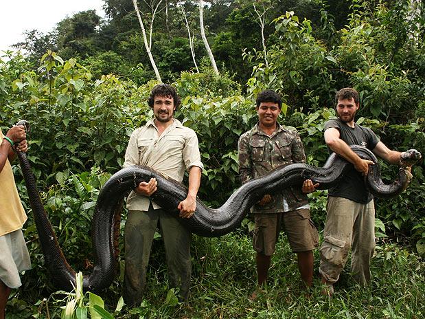 1x1.trans Anaconda Gigante de 100 Kg Encontrada na Guiana, Fotos Sucuri, Cobra