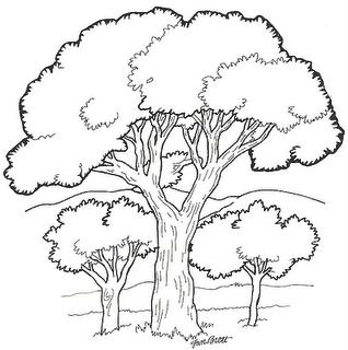 arvore colorir Desenhos para Colorir de Árvore: Imagens para Imprimir e Pintar Grátis