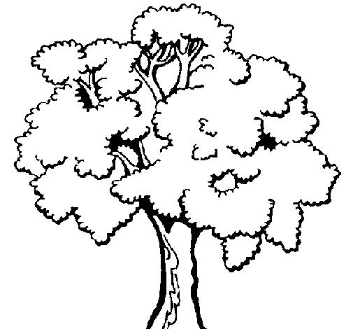 arvores Desenhos para Colorir de Árvore: Imagens para Imprimir e Pintar Grátis