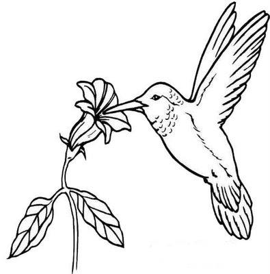 beija flor para colorir Desenhos para Colorir de Beija Flor: Imagens para Imprimir e Pintar
