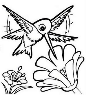 colorir beija flor Desenhos para Colorir de Beija Flor: Imagens para Imprimir e Pintar