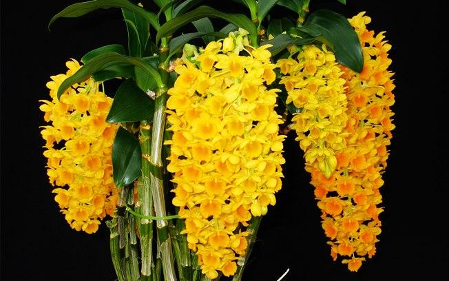 exposição-de-orquídeas-da-aosp