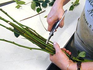 fazer arranjo de flores Como Fazer Arranjo Aéreo de Flores para Decoração: Passo a passo, Dica