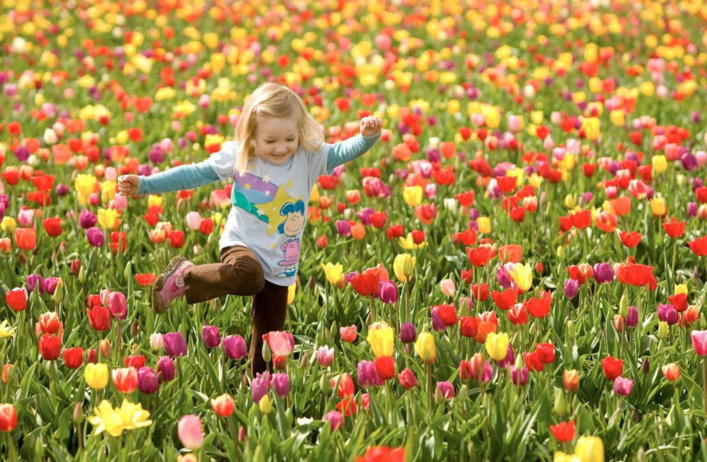 flores primavera Fotos da Primavera: Imagens da Estação, Flores Coloridas e Paisagens