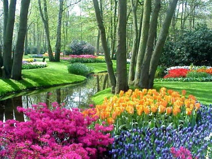 parque florido Fotos da Primavera: Imagens da Estação, Flores Coloridas e Paisagens