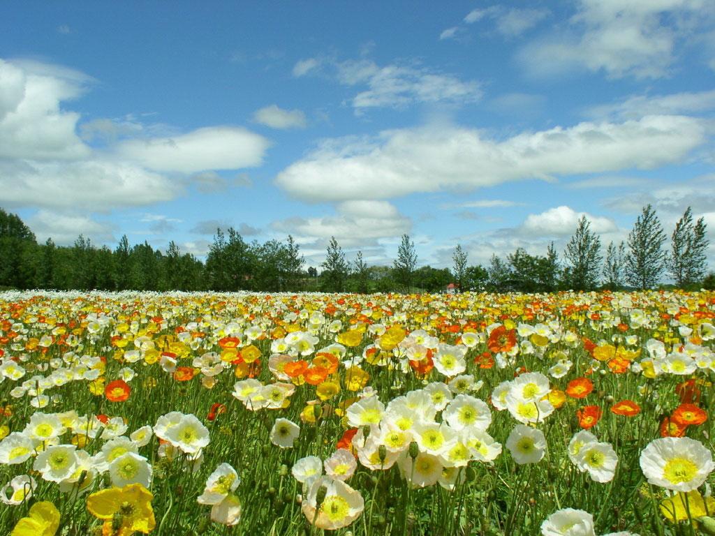 primavera foto Fotos da Primavera: Imagens da Estação, Flores Coloridas e Paisagens