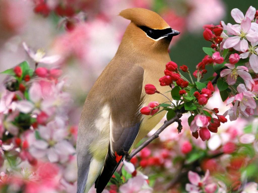 primavera passaro Fotos da Primavera: Imagens da Estação, Flores Coloridas e Paisagens