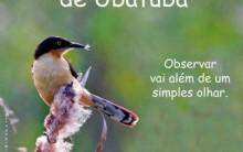UbatubaBirds Festival 2011: Cursos Exposições de Aves, Fotos, Pássaros