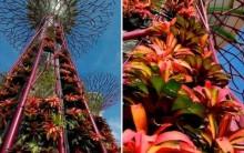 Super Árvores Artificiais de Complexo Ecológico em Cingapura, Fotos