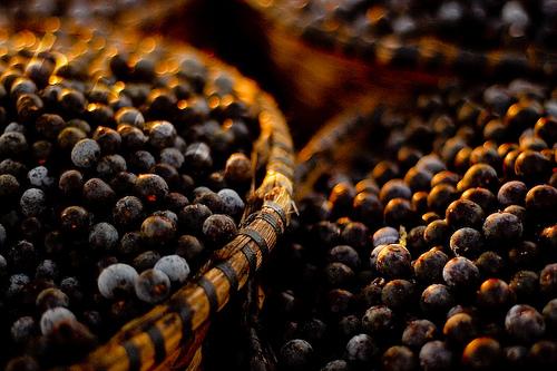 acai 2 Significado das Frutas: Simbolismo e Característica dos Frutos, Origem