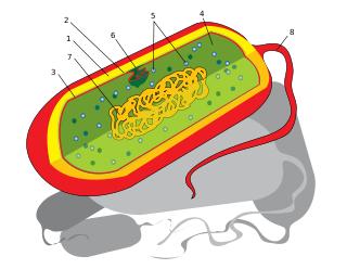 bascteria Hipótese da Evolução Gradual dos Sistemas Químicos: Coacervados e mais