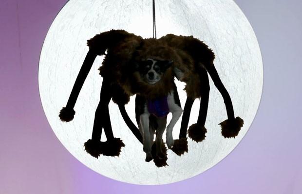 cachorro-vestido-de-aranha-do-youtube-