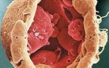 Endocitose (Fagocitose e Pinocitose) e Exocitose: Resumo e Explicação