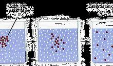Tudo sobre a Difusão Simples: Resumo Transporte do Soluto por Membrana