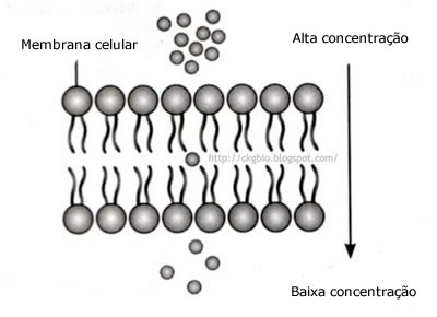difusao Tudo sobre a Difusão Simples: Resumo Transporte do Soluto por Membrana